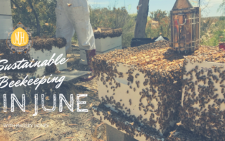 Sustainable Beekeeping in June